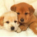 puppies 150x150 How To Take Care of Puppies